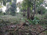 Land for Sale - Matale, Naula