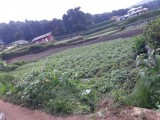 Land for Sale from Nuwara Eliya