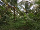 Valuable Coconut Land for Sale