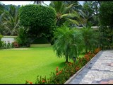 Garden service and landscaping& grasses