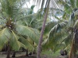 Land with house for sale in puttalam